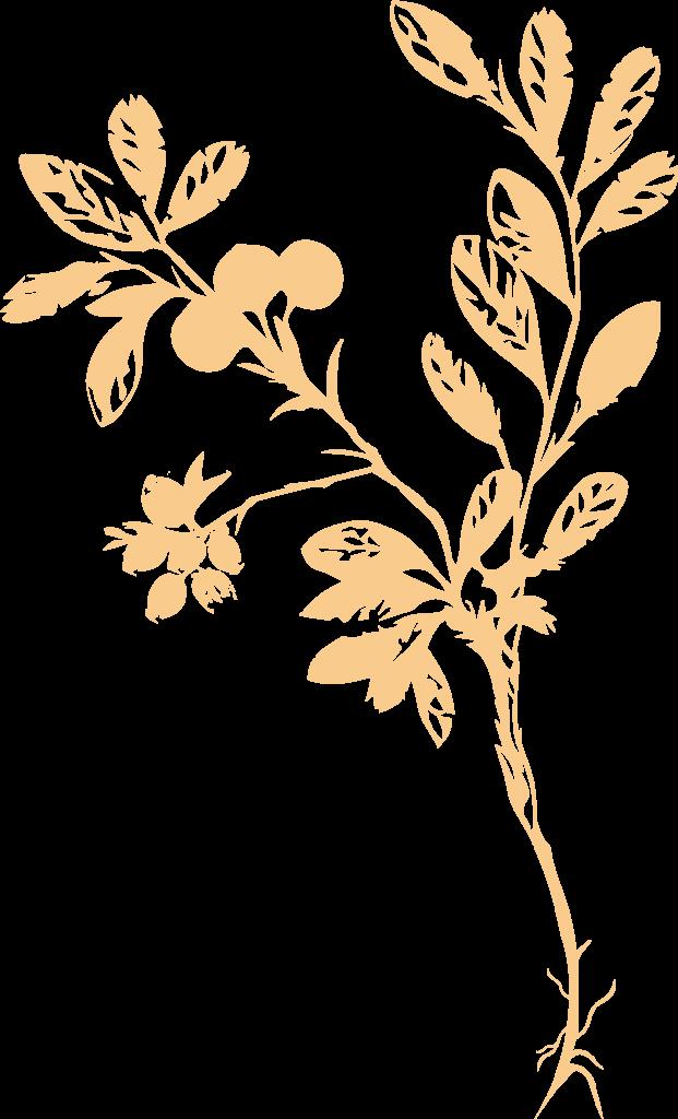 mustikka